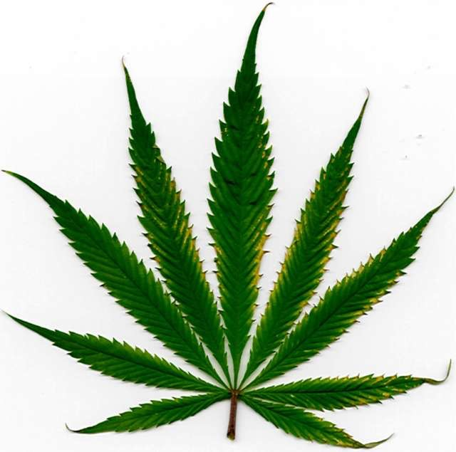 Cannabis and Neuropathy